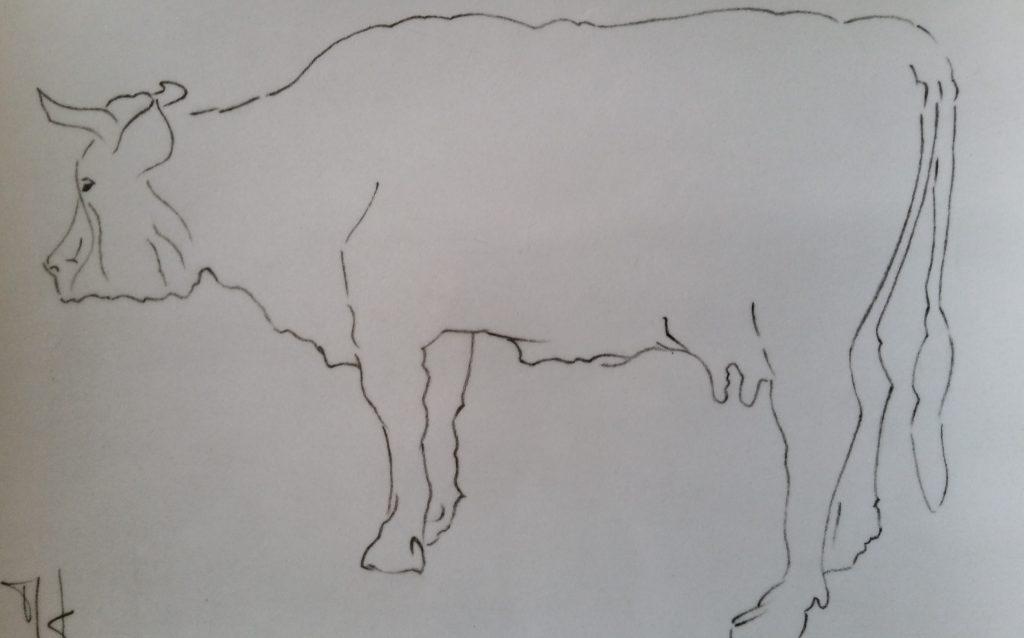 20-1988 la vache croquis