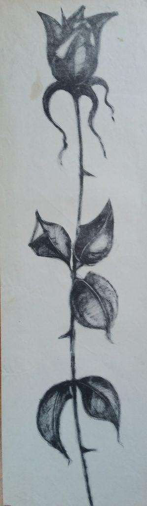 1960 la rose 0,60-0,17 litho,non signé