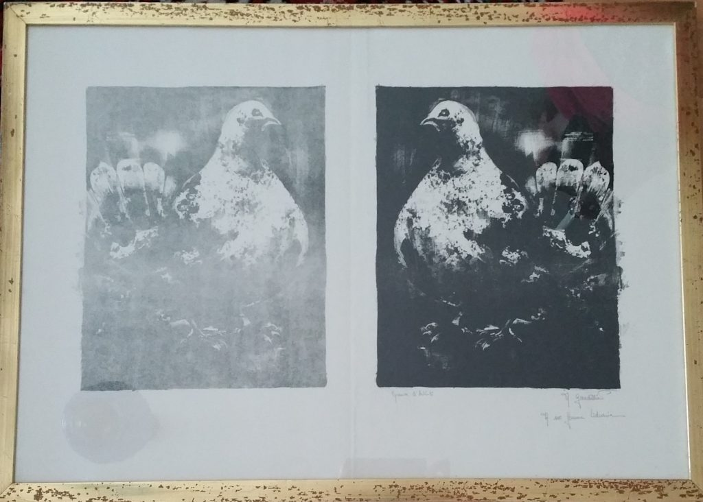 1963 le pigeon 0,30-0,22 lithographie,dédicacée