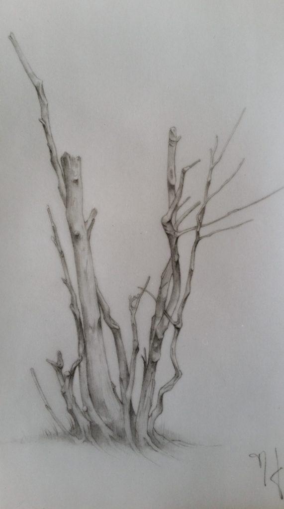 1-1987 l'arbre mort étude