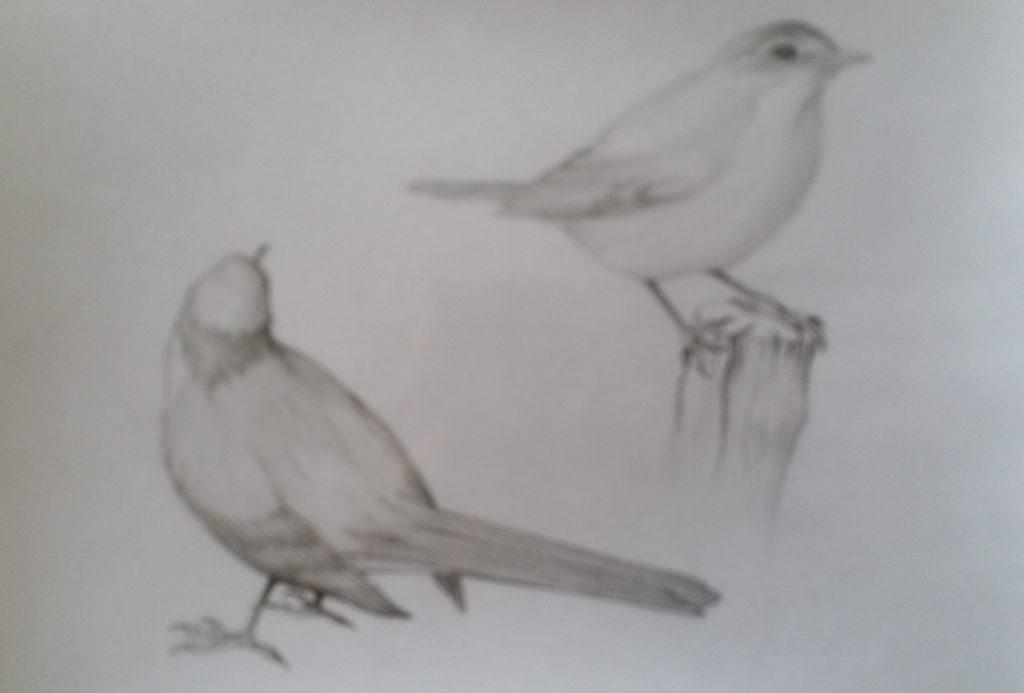 11-1990 oiseaux étude