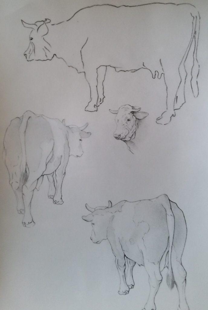 35-1991 vaches étude