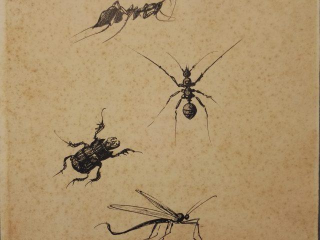 Insectes n°2