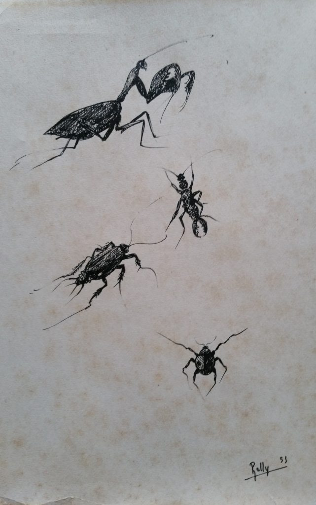 1953 insectes n°3 dessin,signé Rolly