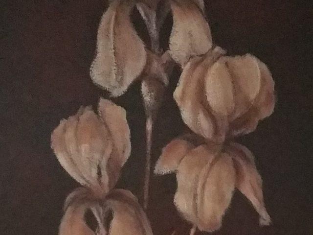 Au jardin de mon père ou Le bouquet d'iris