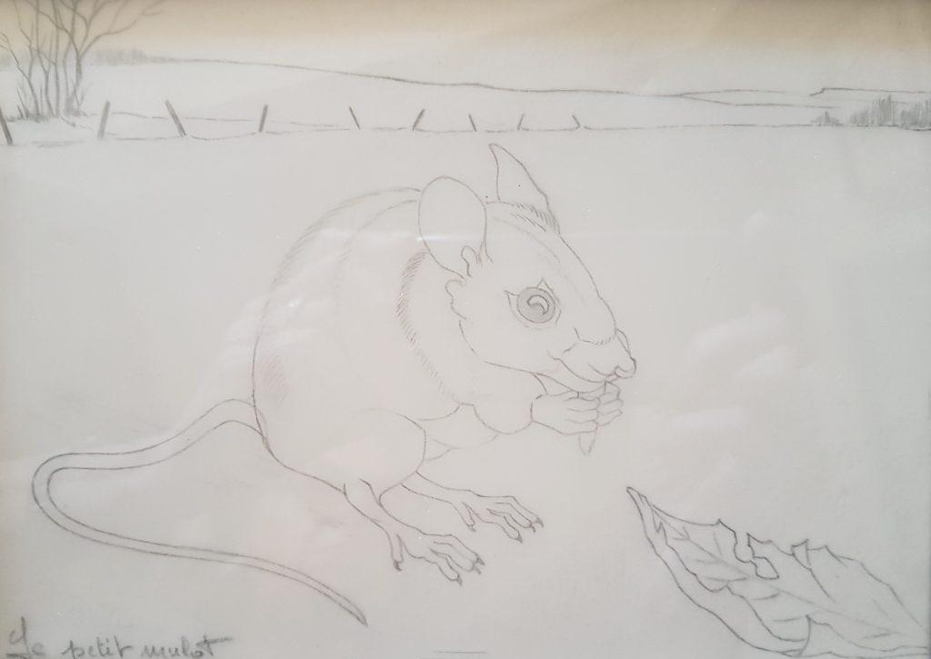 1991 le petit mulot n°1 0,16-0,22 dessin sur calque