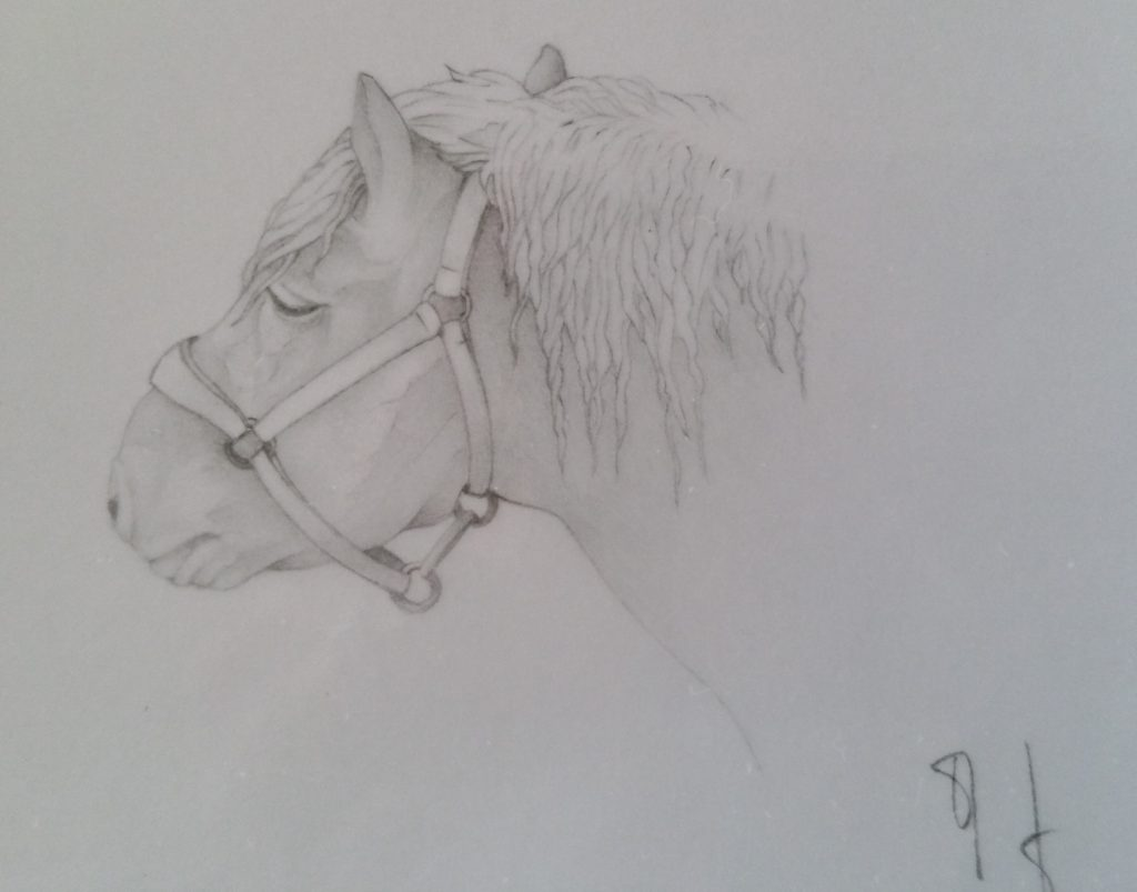 34-1990 cheval comtois étude