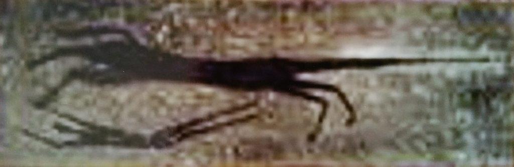 1959 la licorne 0,27-0,84 isorel